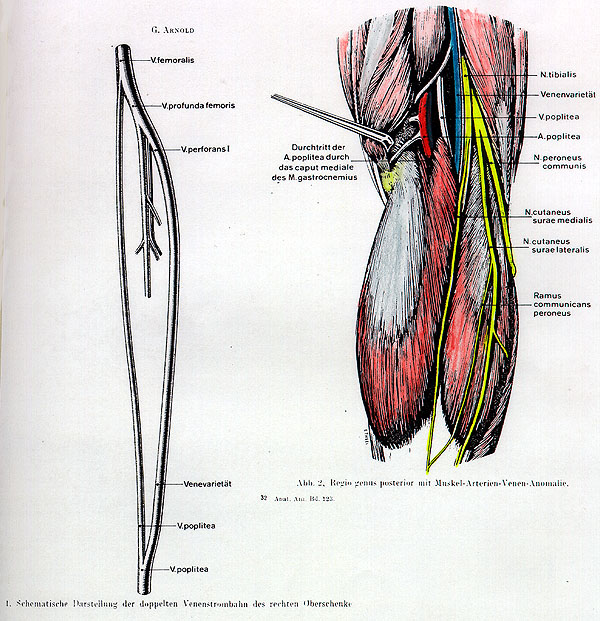 Images of Gastrocnemius Artery - #SpaceHero