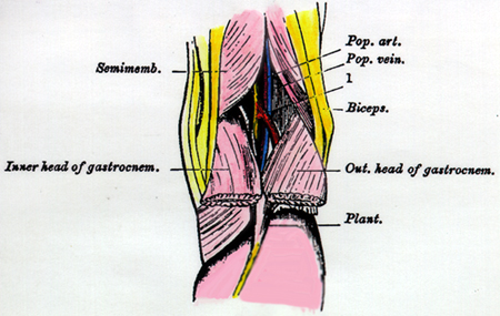 Anatomy Atlases Illustrated Encyclopedia Of Human Anatomic