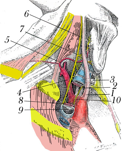 Right Recurrent Laryngeal Nerve and Unusual Right SubclavianArtery