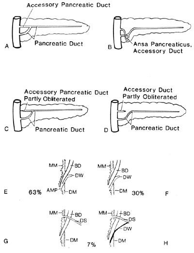 Pancreatic Duct