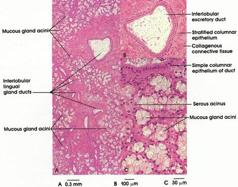 Anatomy Atlases Atlas Of Microscopic Anatomy Section 1 Cells