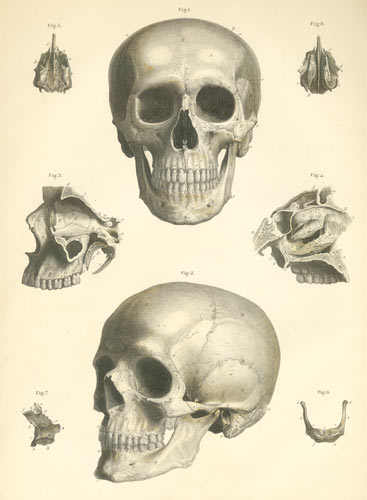 anatomy atlases: atlas of human anatomy: plate 1, Skeleton