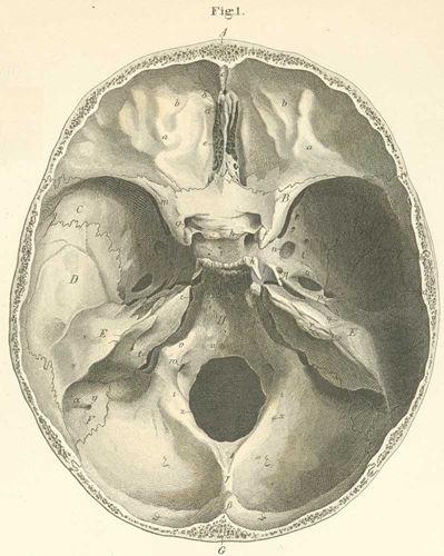 Anatomy Atlases Atlas Of Human Anatomy Plate 2 Figure 1