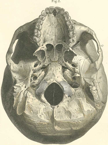 Anatomy Atlases: Atlas of Human Anatomy: Plate 2: Figure 2