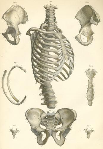 Human bone anatomy