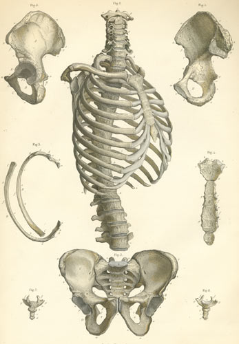 Anatomy Atlases Atlas Of Human Anatomy Plate 3