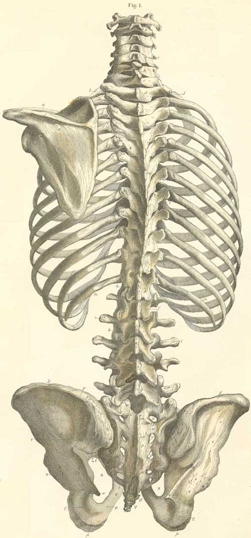 Anatomy Atlases: Atlas of Human Anatomy: Plate 4: Figure 1