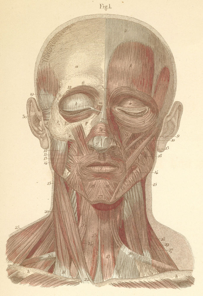 Anatomy Atlases: Atlas of Human Anatomy: Plate 9: Figure 1