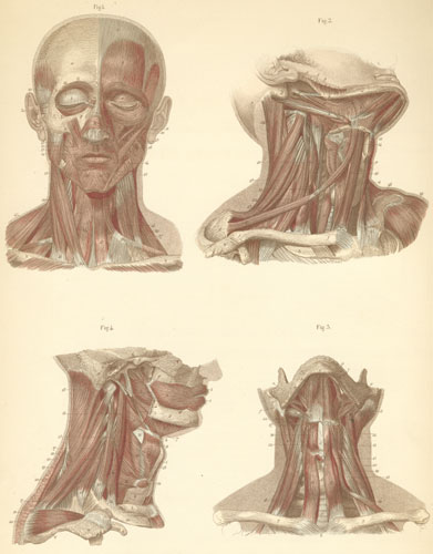 Plate 9: Muscles of the face and neck.