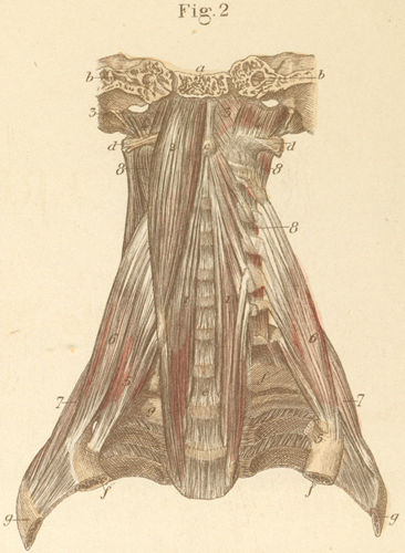 Anatomy Atlases: Atlas of Human Anatomy: Plate 12: Figure 2