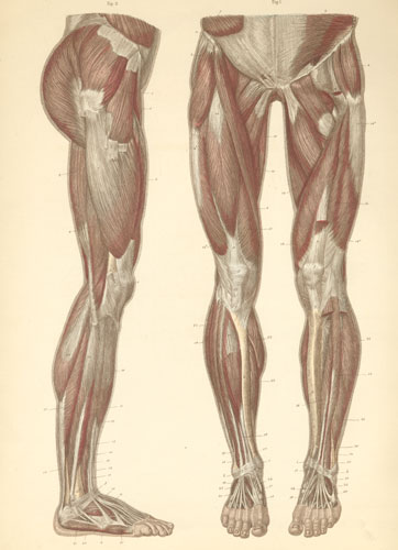 Anatomy Atlases: Atlas of Human Anatomy: Plate 14