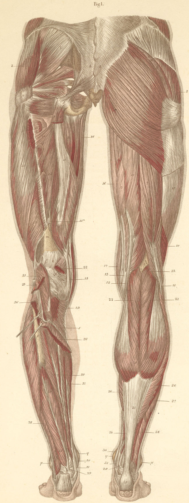 Anatomy and Orthopedics Atlas(Photos of cases) - Page 8
