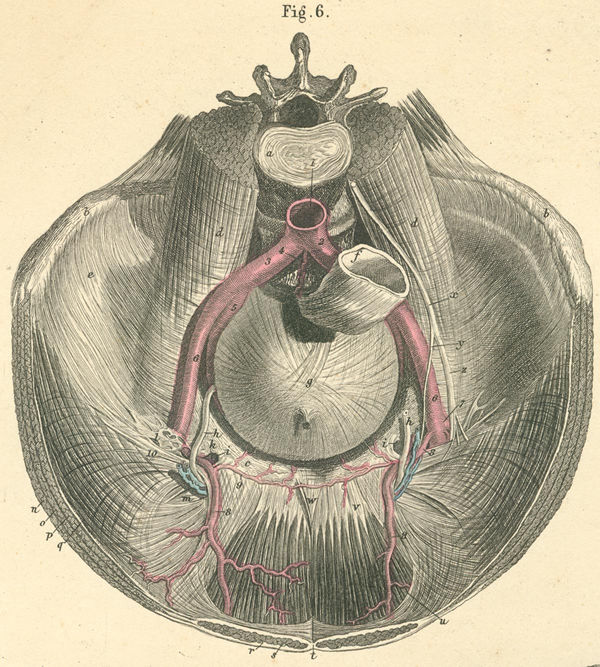 Anatomy Atlases: Atlas of Human Anatomy: Plate 17*: Figure 6