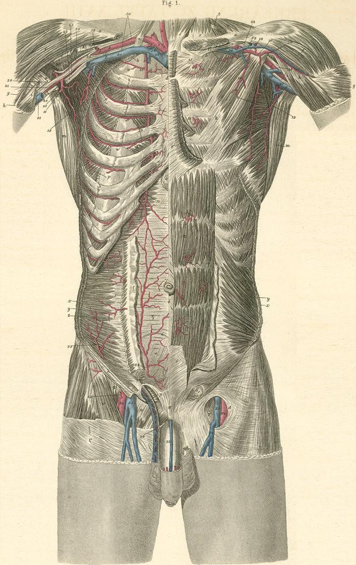 Anatomy Atlases: Atlas of Human Anatomy: Plate 18: Figure 1