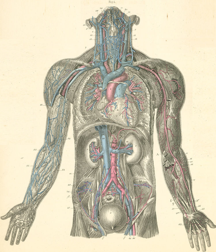 Anatomy Atlases: Atlas of Human Anatomy: Plate 19: Figure 4