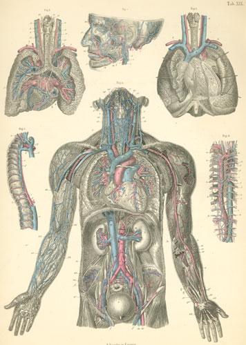 Anatomy Atlases Atlas Of Human Anatomy Plate 19