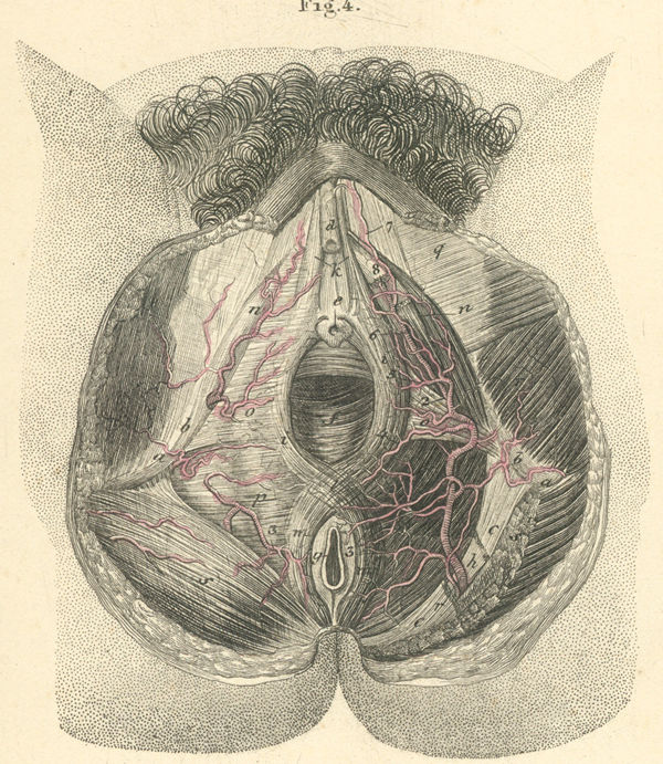 The Anatomy of Perineum Rectum