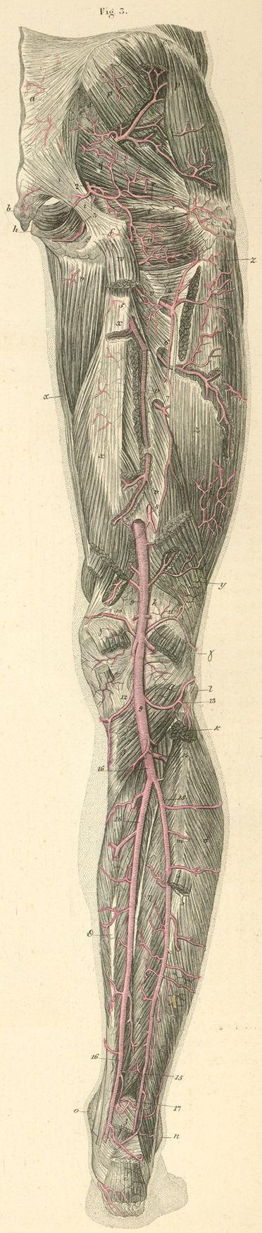 Anatomy Atlases: Atlas of Human Anatomy: Plate 21: Figure 3