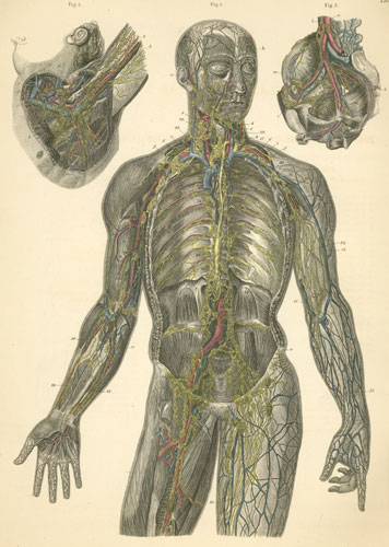 'Plate 22: Lymph vessels and lymph nodes and the lymphatic system on the right and left sides of the body.' from the web at 'http://www.anatomyatlases.org/atlasofanatomy/plate22/images/plate22.jpg'