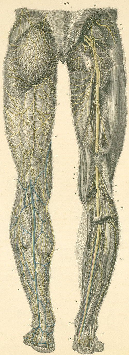 Anatomy Atlases: Atlas of Human Anatomy: Plate 29: Figure 3