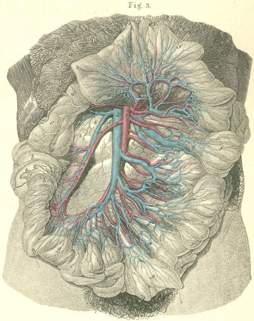 jejunum ileum elevated colon, with 34-3_static.jpg