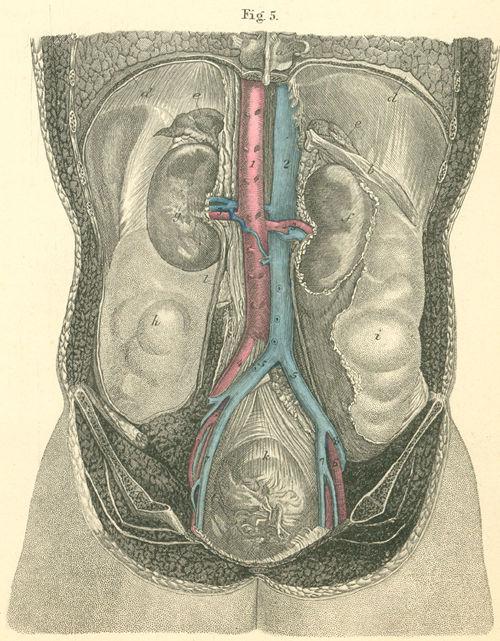 Anatomy Atlases Atlas Of Human Anatomy Plate 34 Figure 5