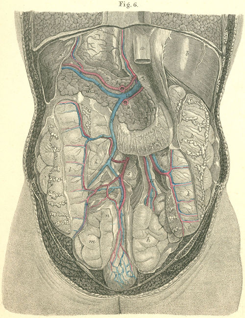 Anatomy atlases atlas of human anatomy plate 34 figure 6 the abdominal cavity viewed from behind ccuart Gallery