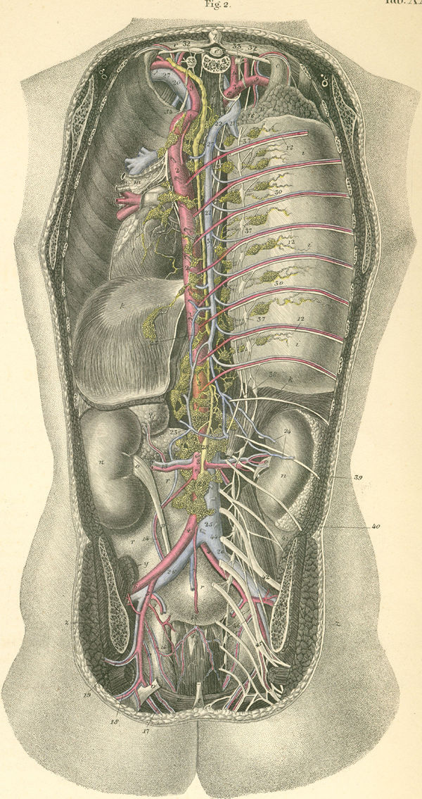 Anatomy Atlases Atlas Of Human Anatomy Plate 35 Figure 2