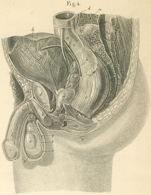 outer inner parts male organs 36-4_static.jpg