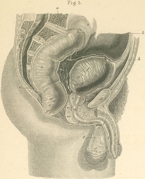outer inner parts male organs, 36-5_static.jpg