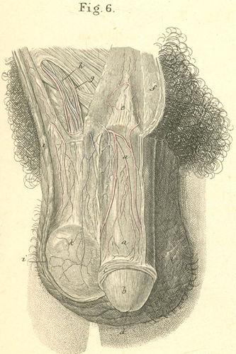 Anatomy Atlases: Atlas of Human Anatomy: Plate 36: Figure 6
