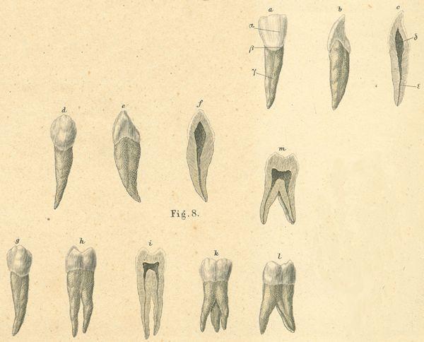 Anatomy Atlases Atlas Of Human Anatomy Plate 37 Figure 8
