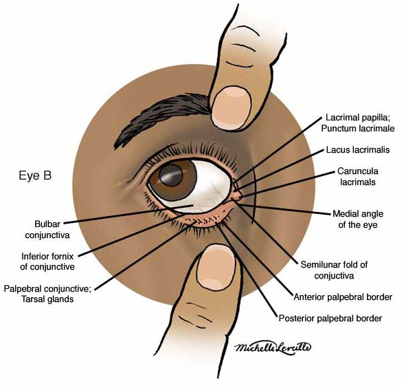 Anatomy Atlases Anatomy Of First Aid A Case Study Approach The Eye