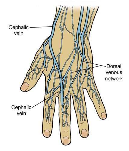 hr) shooting heroin in a hand vein, Cephalic Vein
