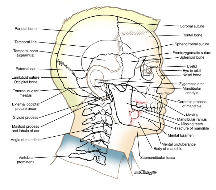 Anatomy Atlases  Anatomy Of First Aid  A Case Study